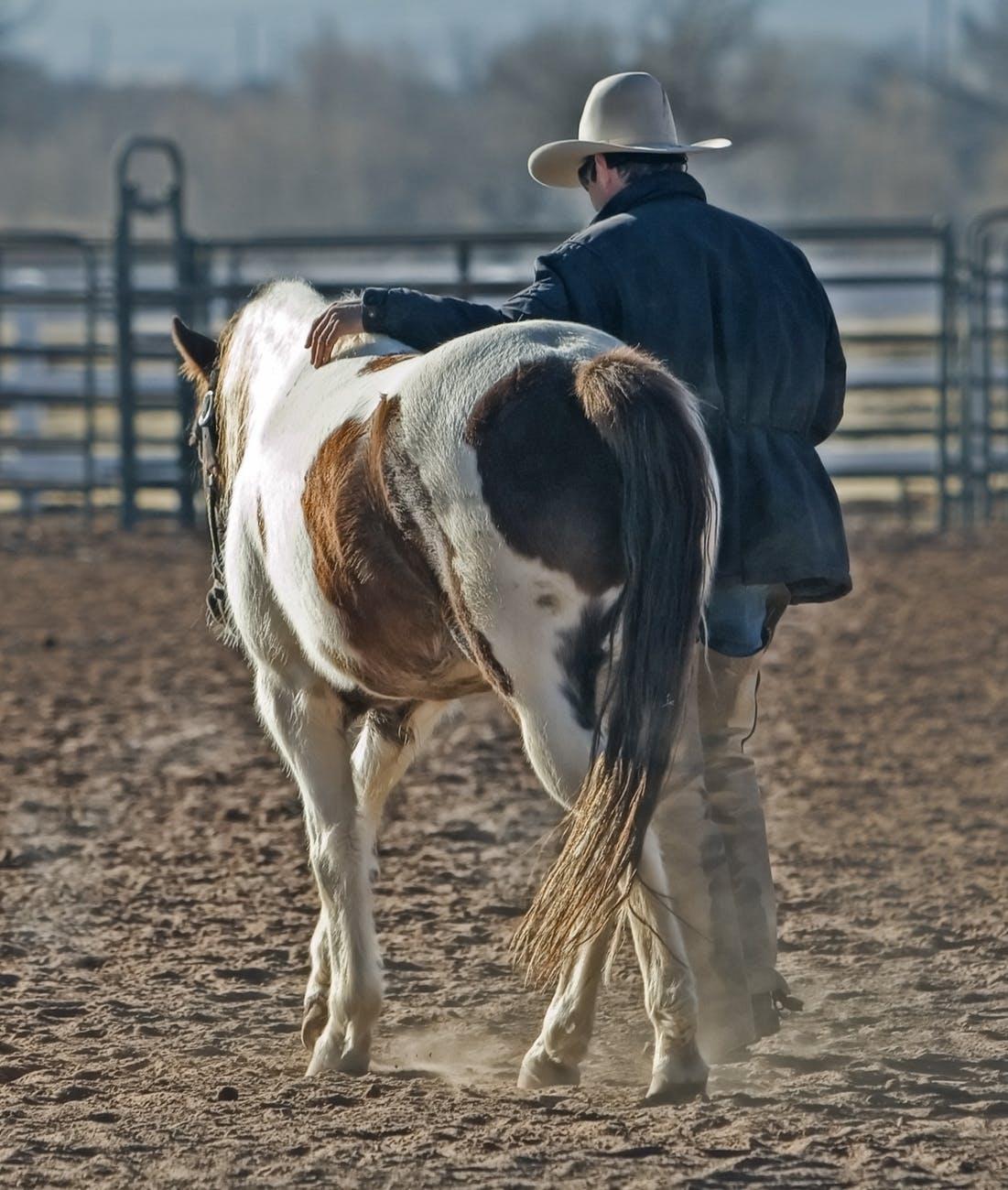 Saddle Up The Journey Begins Cowboyaccountant Com
