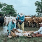 What You Should Know About Cattle Brands