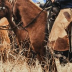 Cowboy Gear: Your Guide to Western Chaps