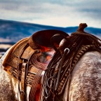 The Secret Of Why You Should Always Saddle Your Own Horse